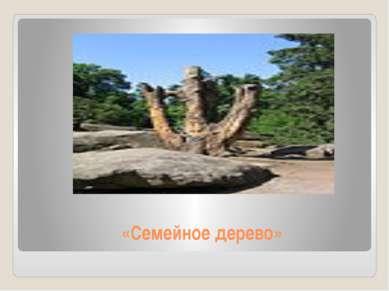«Семейное дерево»