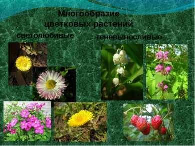 Многообразие цветковых растений светолюбивые теневыносливые
