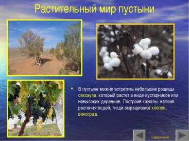 Растительный мир пустыни В пустыне можно встретить небольшие рощицы саксаула,...