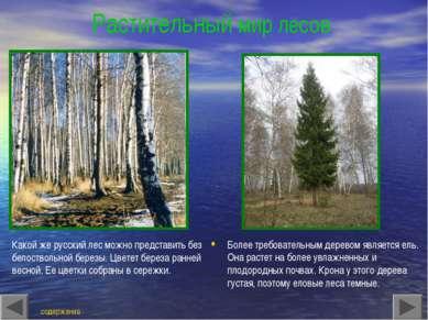 Растительный мир лесов Какой же русский лес можно представить без белоствольн...