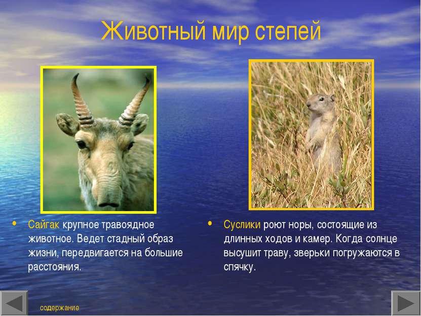 Животный мир степей Сайгак крупное травоядное животное. Ведет стадный образ ж...