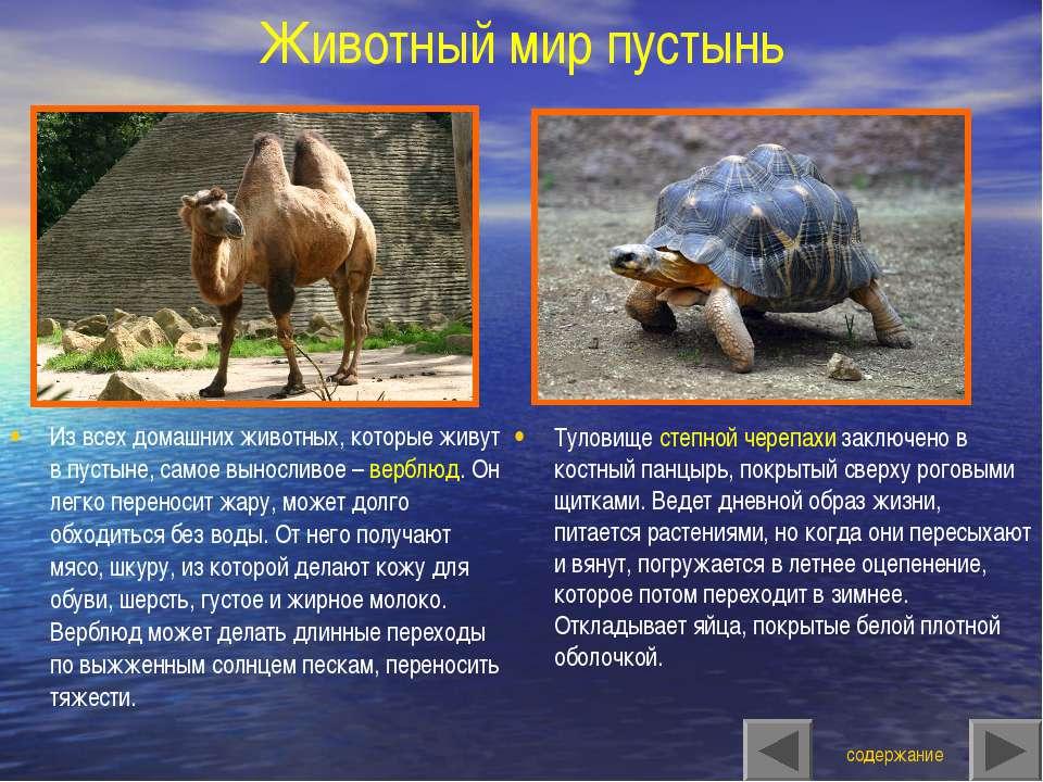 Животный мир пустынь Туловище степной черепахи заключено в костный панцырь, п...