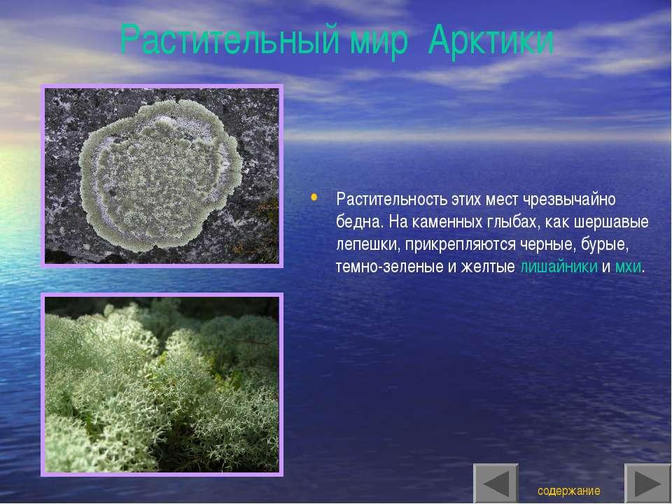 Растительный мир Арктики Растительность этих мест чрезвычайно бедна. На камен...
