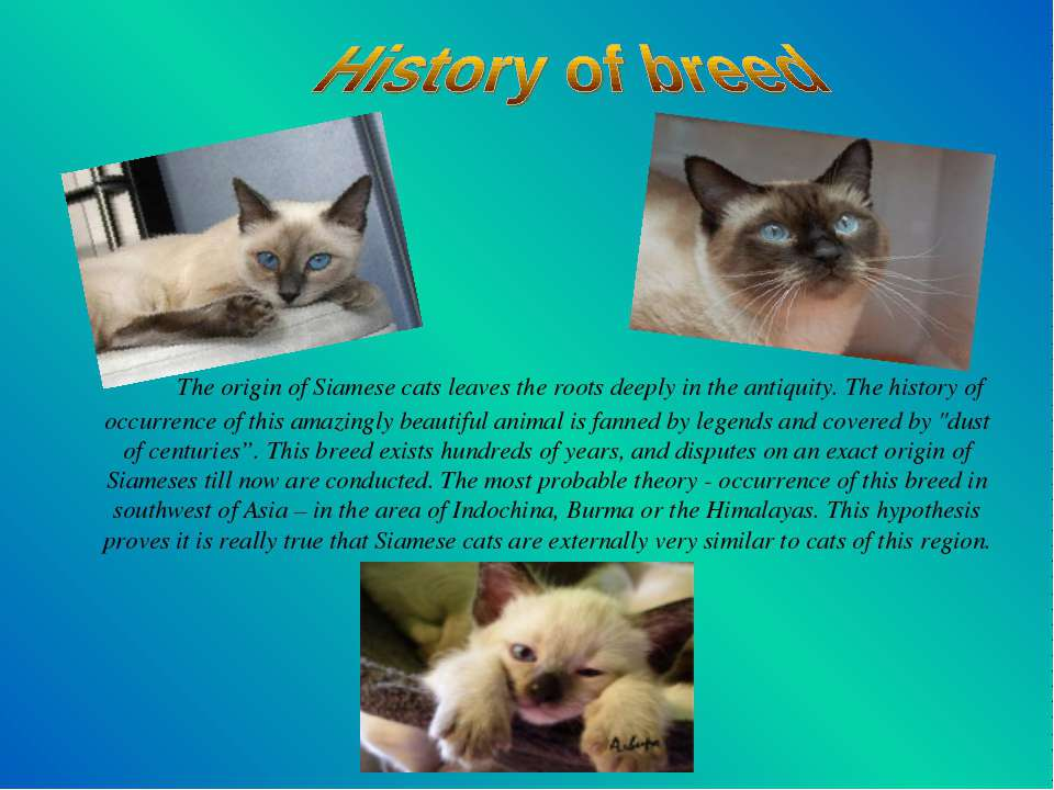 The origin of Siamese cats leaves the roots deeply in the antiquity. The hist...