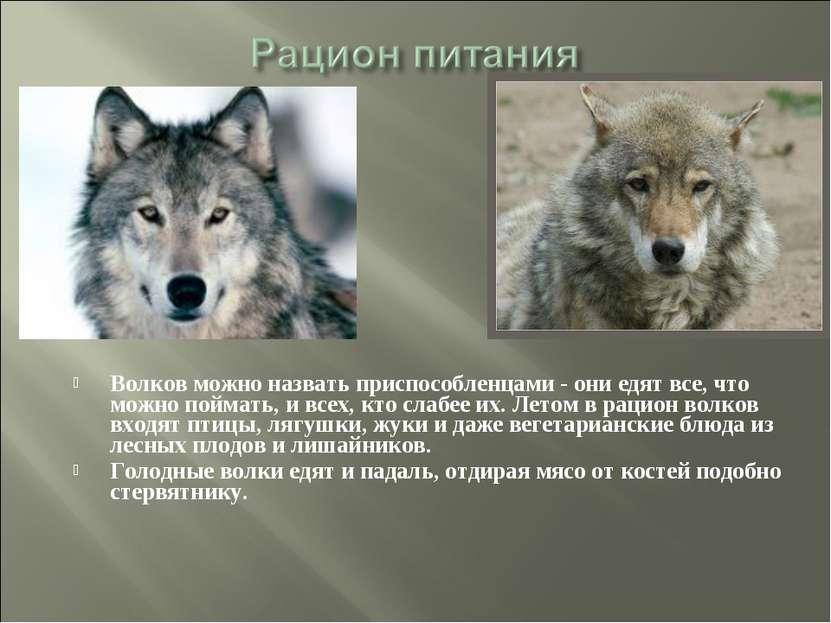 Волков можно назвать приспособленцами - они едят все, что можно поймать, и вс...