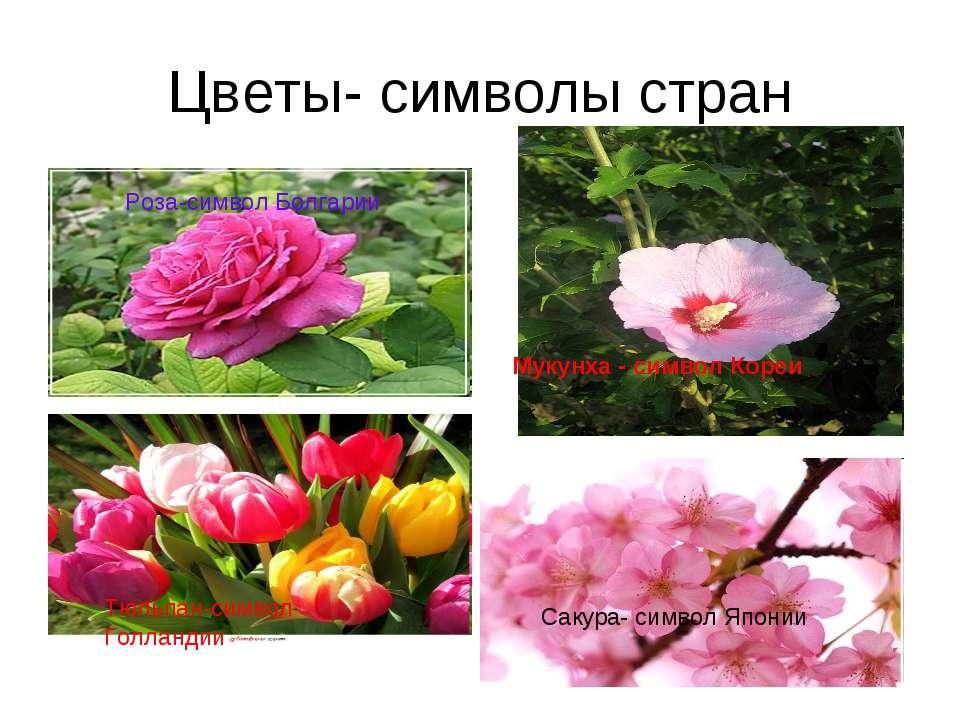 Цветы- символы стран Роза-символ Болгарии Сакура- символ Японии Тюльпан-симво...