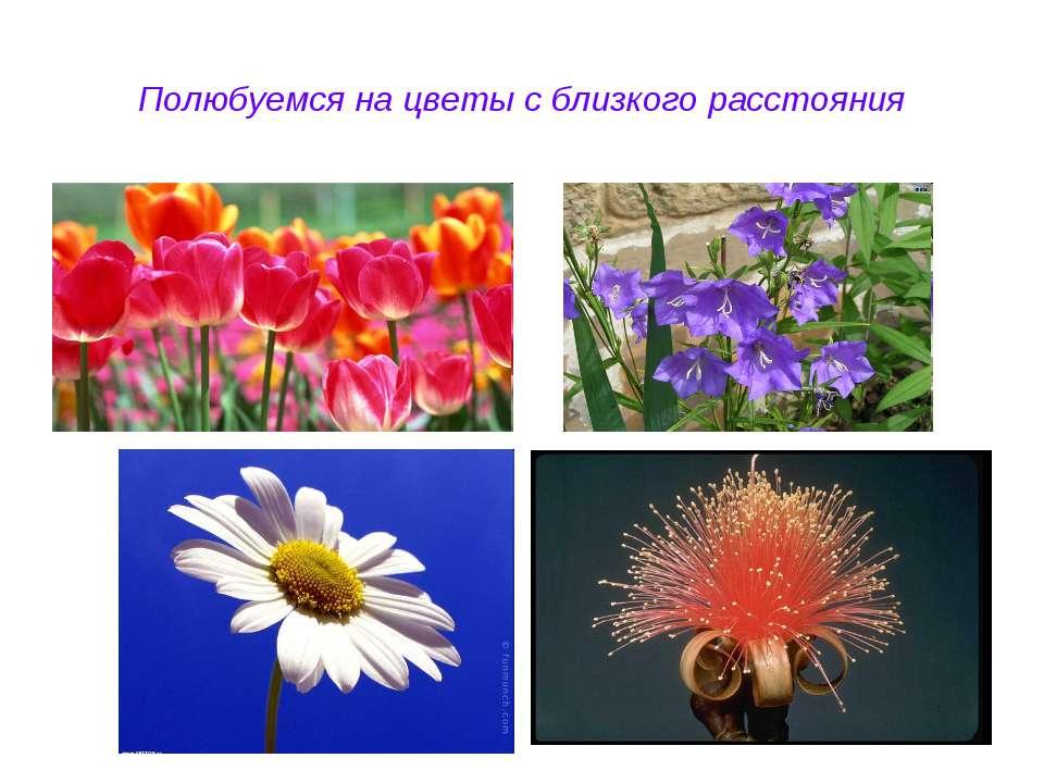 Полюбуемся на цветы с близкого расстояния
