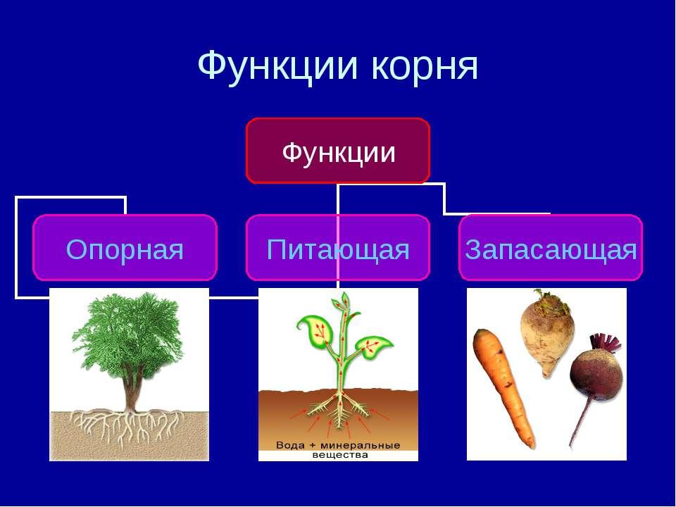 Функции корня