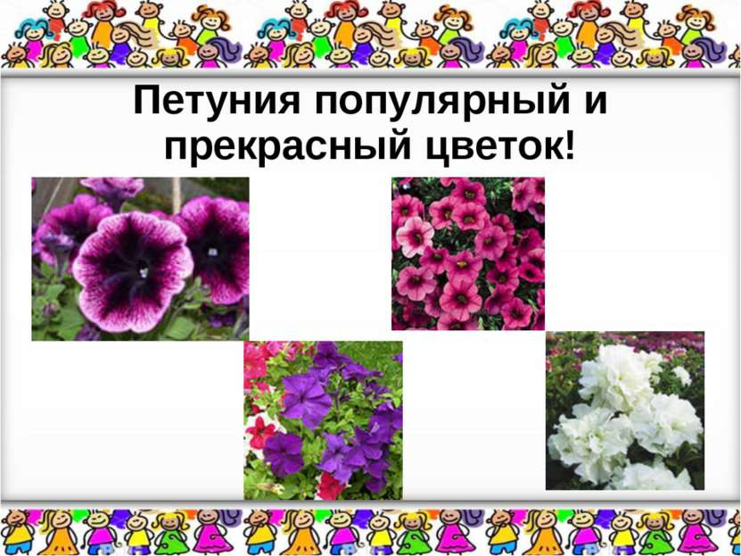 Петуния популярный и прекрасный цветок!