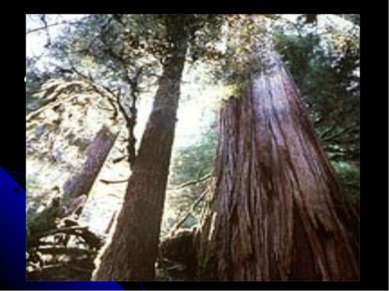 Массовое сведение лесов Это одна из наиболее важных проблем так, как леса пог...