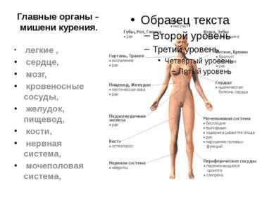 Главные органы – мишени курения. легкие , сердце, мозг, кровеносные сосуды, ж...