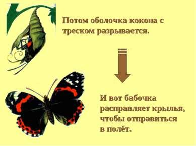 И вот бабочка расправляет крылья, чтобы отправиться в полёт. Потом оболочка к...