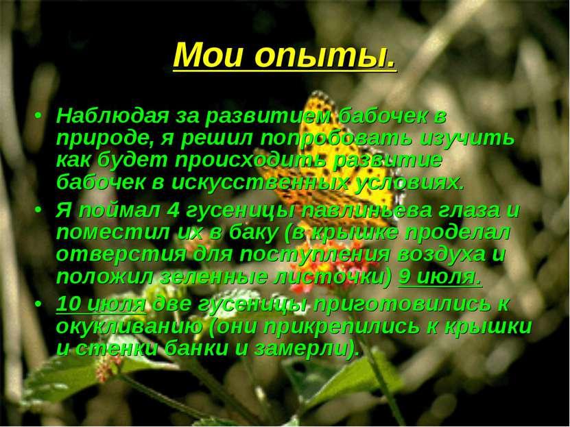 Мои опыты. Наблюдая за развитием бабочек в природе, я решил попробовать изучи...