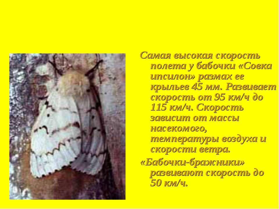 Самая высокая скорость полета у бабочки «Совка ипсилон» размах ее крыльев 45 ...