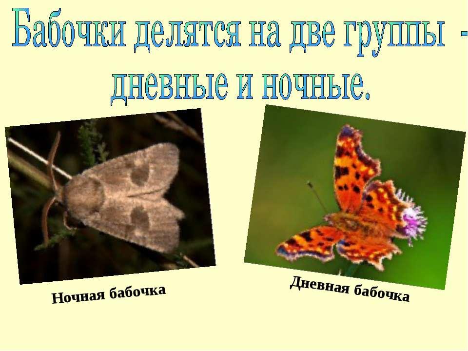 Ночная бабочка Дневная бабочка