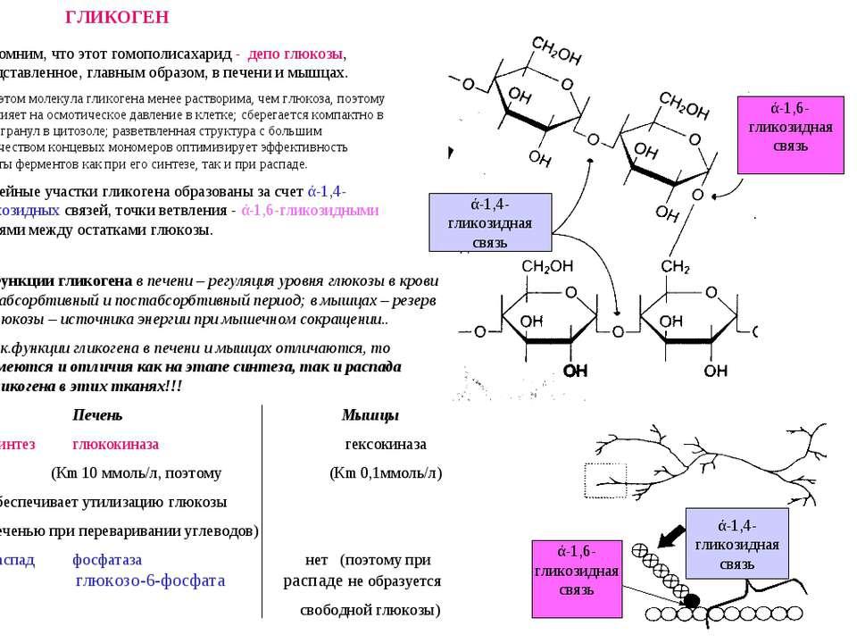 ГЛИКОГЕН ά-1,6- гликозидная связь ά-1,4- гликозидная связь Напомним, что этот...