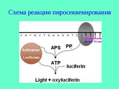Схема реакции пиросеквенирования