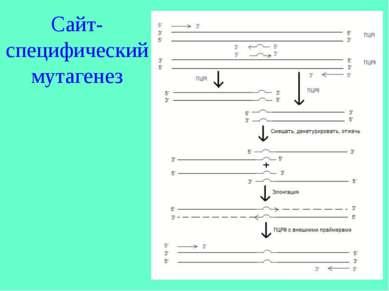 Сайт-специфический мутагенез
