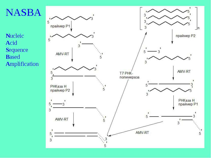 NASBA Nucleic Acid Sequence Based Amplification
