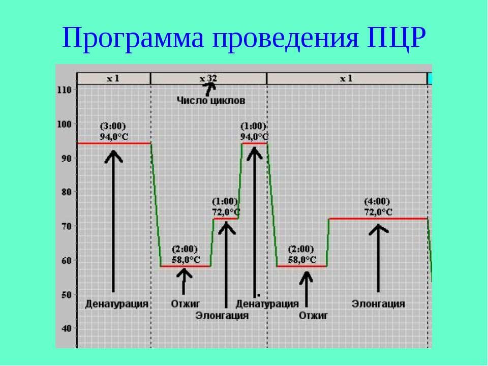 Программа проведения ПЦР