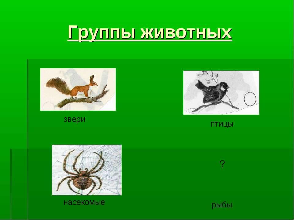 Группы животных звери птицы насекомые рыбы ?