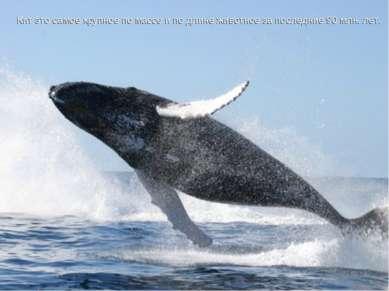 Кит это самое крупное по массе и по длине животное за последние 90 млн. лет. ...