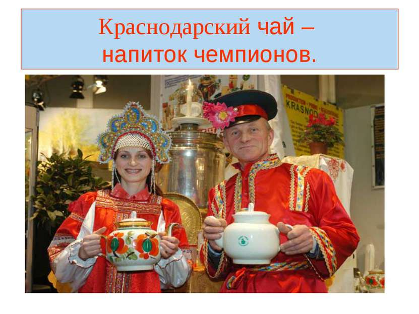 Краснодарский чай – напиток чемпионов.