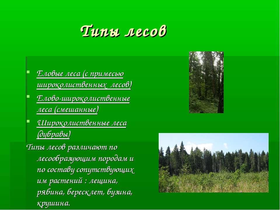 Типы лесов Еловые леса (с примесью широколиственных лесов) Елово-широколистве...