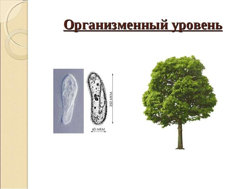 Организменный уровень