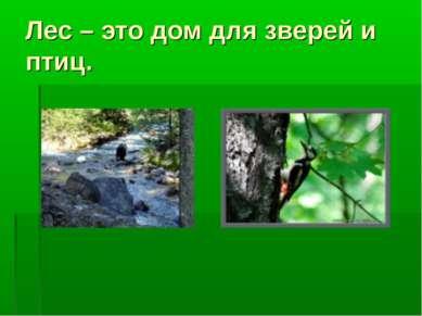 Лес – это дом для зверей и птиц.