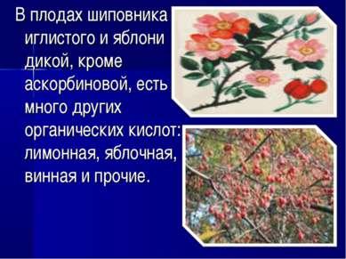 В плодах шиповника иглистого и яблони дикой, кроме аскорбиновой, есть много д...