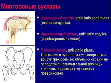 Многоосные суставы Шаровидный сустав, articulatio spheroidea (плечевой сустав...