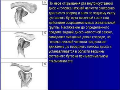 По мере открывания рта внутрисуставной диск и головка нижней челюсти синхронн...