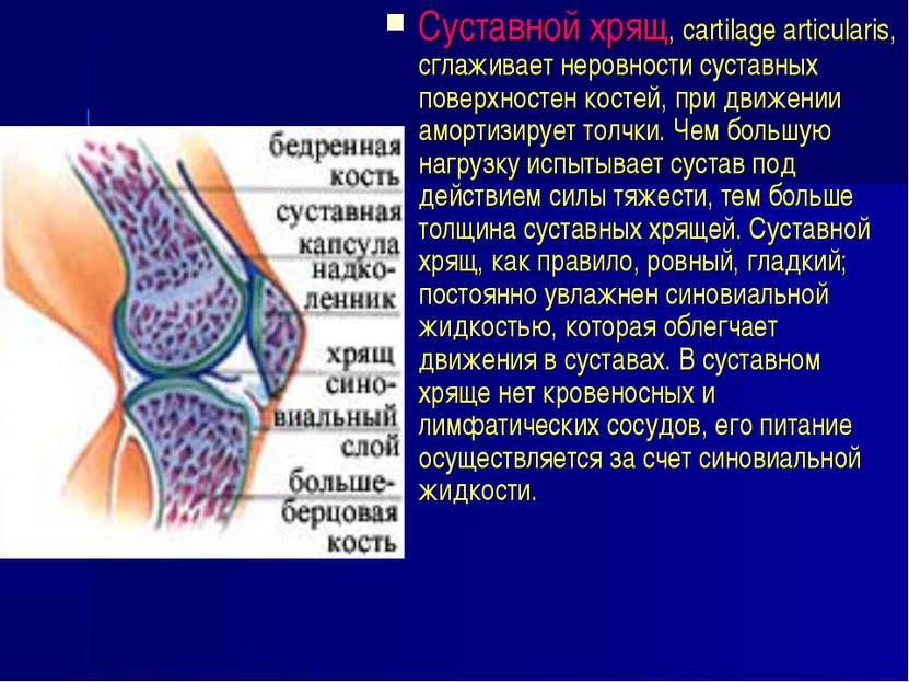 Суставной хрящ, cartilage articularis, сглаживает неровности суставных поверх...