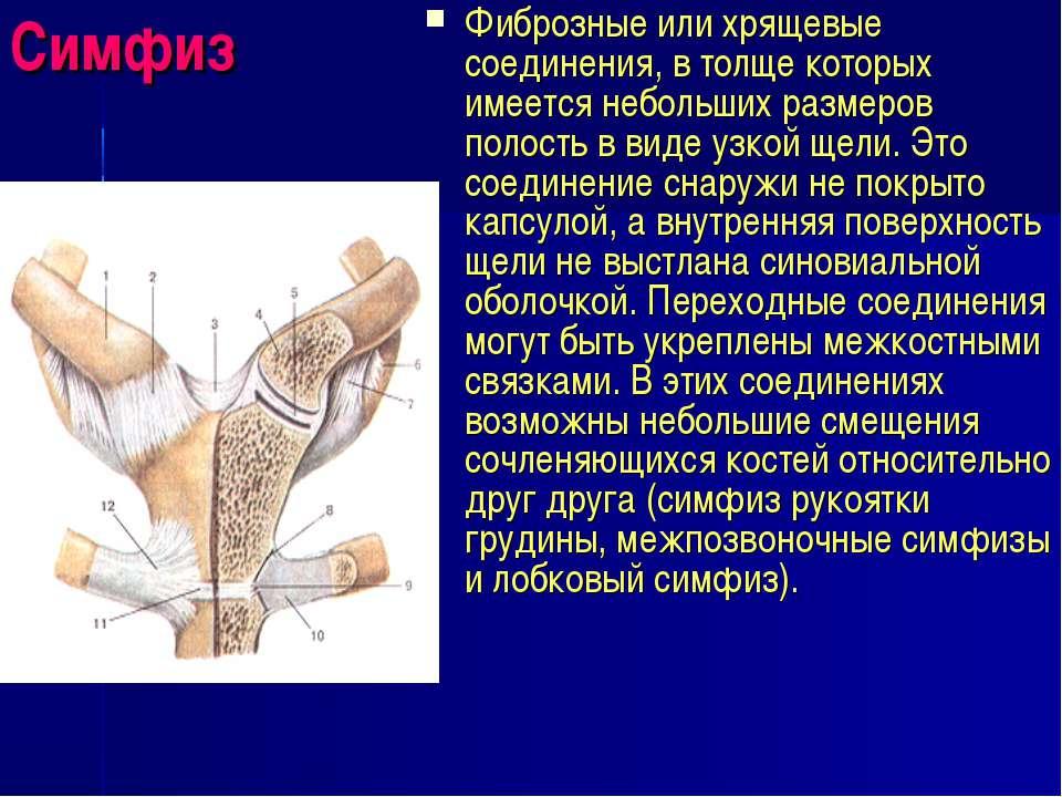 Симфиз Фиброзные или хрящевые соединения, в толще которых имеется небольших р...