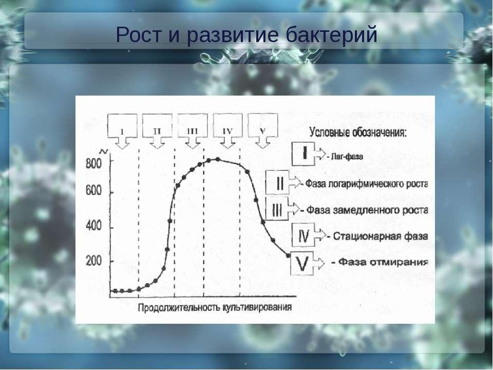 Рост и развитие бактерий