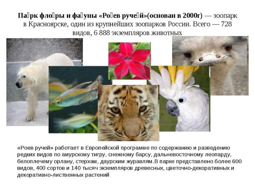 Па рк фло ры и фа уны «Ро ев руче й»(основан в 2000г)— зоопарк в Красноярске...
