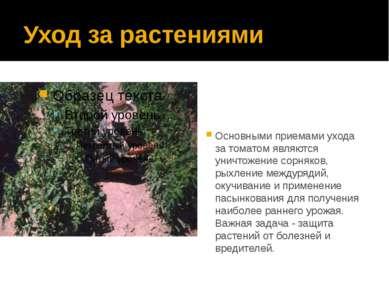 Уход за растениями Основными приемами ухода за томатом являются уничтожение с...