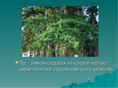 Лес - земная кладовая, из которой черпают сырьё почти все отрасли народного х...