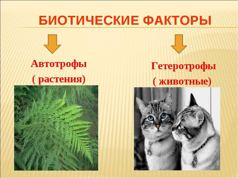 БИОТИЧЕСКИЕ ФАКТОРЫ Автотрофы ( растения) Гетеротрофы ( животные)