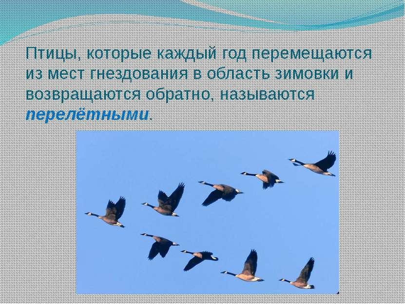 Птицы, которые каждый год перемещаются из мест гнездования в область зимовки ...