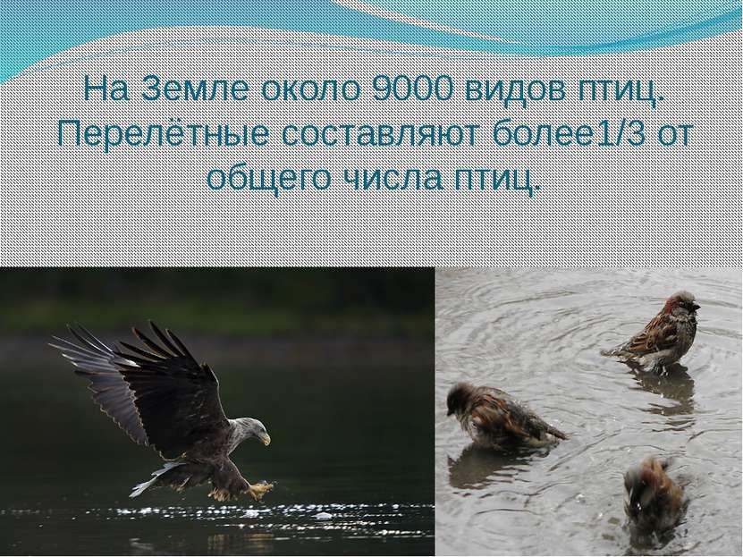На Земле около 9000 видов птиц. Перелётные составляют более1/3 от общего числ...