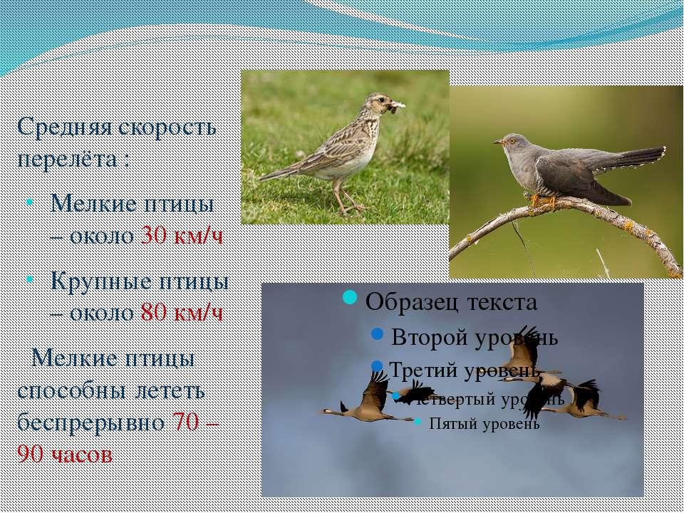 Средняя скорость перелёта : Мелкие птицы – около 30 км/ч Крупные птицы – окол...