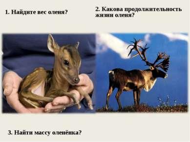 1. Найдите вес оленя? 2. Какова продолжительность жизни оленя? 3. Найти массу...