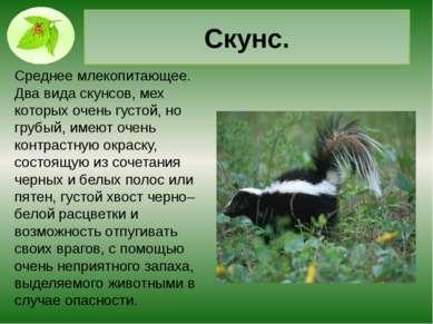 Щелезуб. Млекопитающее из отряда насекомоядных. Сравнительно крупный, относит...