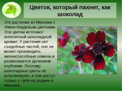 Традесканция. Дэвид Латимер и его традесканция — растение, которое он 40 лет ...