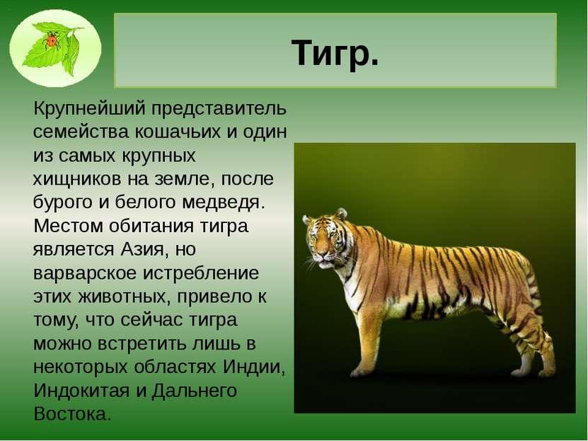 Зебра. Характерной чертой всех видов зебр, являются черные полоски на теле, с...