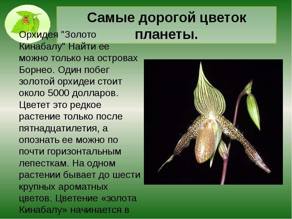 Растение, которое способно переварить крысу вместе с зубами и костями Существ...