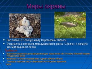 Меры охраны Вид внесён в Красную книгу Саратовской области. Охраняется в пред...