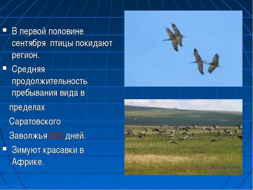 В первой половине сентября птицы покидают регион. Средняя продолжительность п...